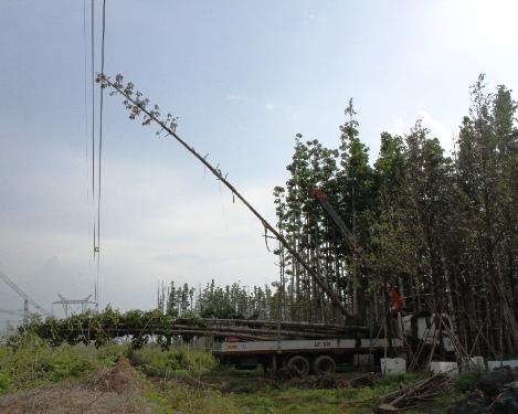 Đọt cây dầu bị vướng vào đường dây 500KV