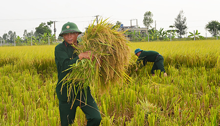 """Công an, bộ đội, học sinh gặt lúa giúp dân """"chạy"""" bão số 7"""
