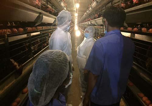 Trang trại chăn nuôi gia cầm công nghệ cao của Công ty Ba Huân ở Bình Dương