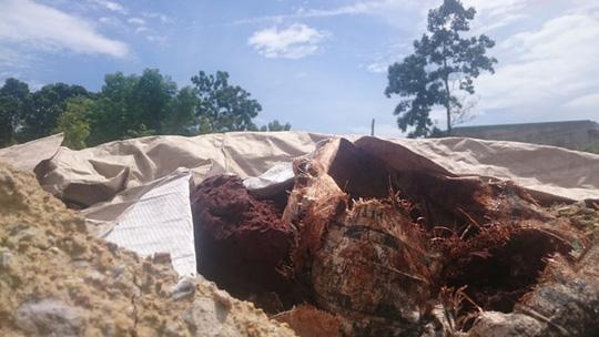 Chất thải chôn lấp trái phép của Công ty Ánh Dương