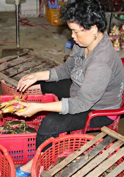 Nhiều hộ nuôi cua ở Cà Mau thua lỗ khi bỏ tiền đầu tư thả nuôi đón giá dịp Trung thu. Ảnh: Phúc Hưng