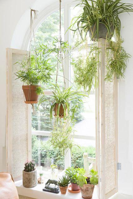 9 loại cây vừa sạch nhà vừa tốt cho sức khỏe nên trồng