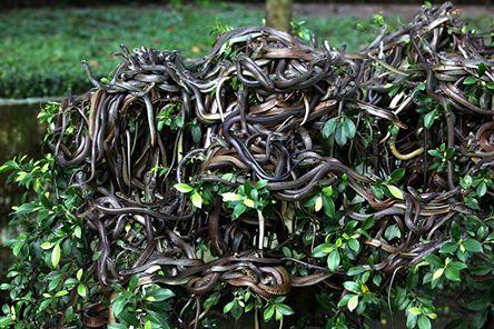 Hòn đảo đầy rắn ở Brazil. Ảnh: girlsaskguys, whereongoogleearth