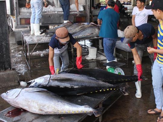 Cá ngừ đại dương do ngư dân Khánh Hòa đánh bắt. Ảnh: Kỳ Nam