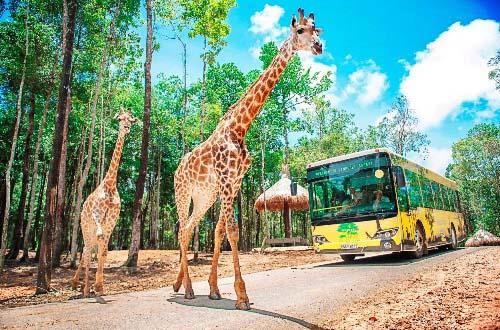 Khám phá thế giới động vật hoang dã tại Vinpearl Phú Quốc