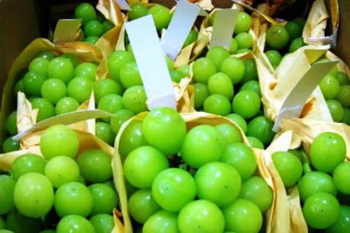 Nho mẫu đơn xanh trái căng mọng, có mùi thơm thoảng thoảng mùi xoài chín. Ảnh: Hana.