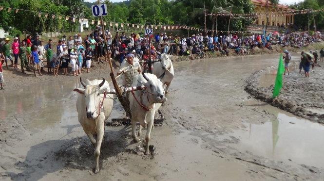 Lễ hội đua bò hằng năm thu hút hàng ngàn lượt người trong cả nước về An Giang xem dù trời nắng chói chang  Ảnh: BỬU ĐẤU