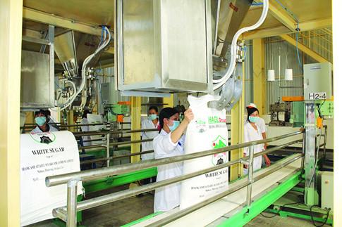 Sản xuất mía đường của Tập đoàn HoàngAnh Gia Lai ẢNH: MINH TRẦN