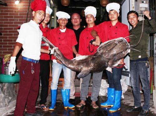 Con cá lăng nặng 75kg vừa được vận chuyển tới Hà Nội vào 2h hôm 10-11. Ảnh: Xuân Bách.