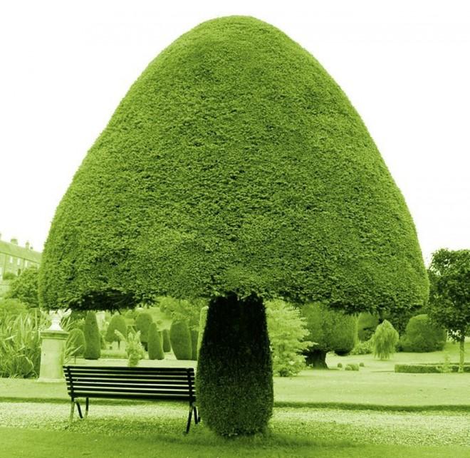 Một cây hình nấm tại Scotland. Ảnh: 1001 Gardens and Landscapes.