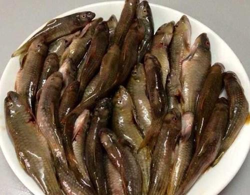 Các loại cá đồng giờ được đi máy bay ra Hà Nội để phục vụ nhu cầu của khách.