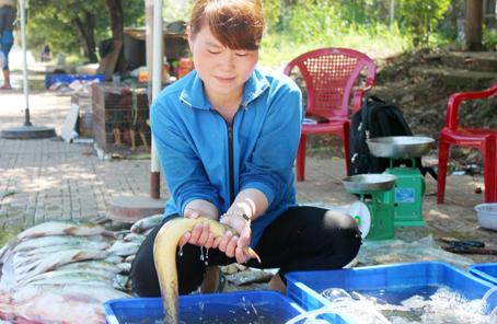 """Chị Lương Hoàng Ngọc Hà, chủ vựa cá đặc sản ở Thị trấn Vĩnh An (huyện Vĩnh Cửu) mới mua được con cá chạch lấu """"khủng""""."""
