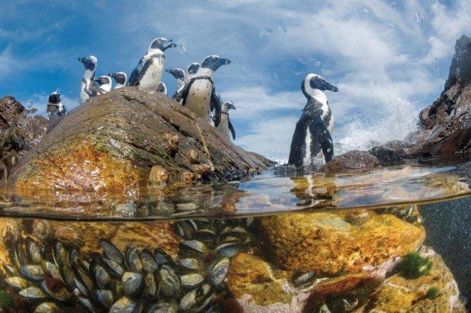 Bờ biển Skeleton, Namibia - Ảnh: National Geographic