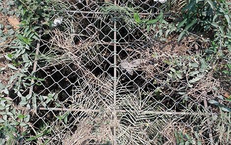 Dưới đáy giếng cổ ở thôn Xuân An có một khối gỗ không mục nát, hư hỏng dù ngâm trong nước nhiều thế kỷ.