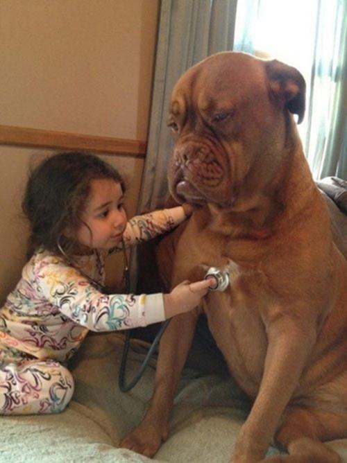 Đa số trẻ nhỏ đều có một tình yêu thương đặc biệt dành cho động vật. Chúng cho rằng, động vật cũng có thể nghe, hiểu thấu những điều chúng nói. Và đôi khi chúng cũng lo lắng rằng liệu người bạn chó này của mình có đang ốm như mình không nhỉ?.