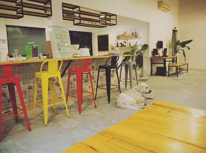 Phòng ăn của Packo cũng được thiết kế rất bắt mắt như một quán cà phê nhỏ, với bàn gỗ dài và những chiếc ghế nhiều màu, tạo nên cảm giác hấp dẫn, thích thú khi bước vào. Ảnh: Sunny_scorpior.