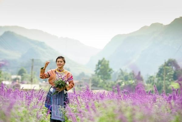 Giới trẻ đổ xô đến chụp hình ở cánh đồng hoa oải hương Lào Cai