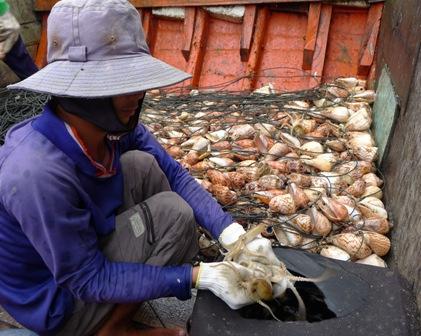 Bạch tuộc còn tươi sống như thế này chỉ có giá từ 60.000 - 80.000 đồng/kg