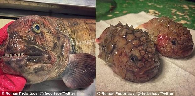 Bộ sưu tập 'quái vật đại dương' của ngư dân Nga