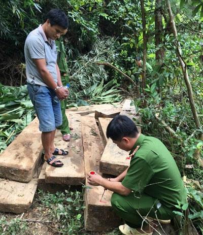 Hiện trường vụ chặt phá rừng tại xã Yên Tĩnh, huyện Tương Dương, tỉnh Nghệ An