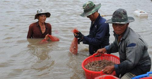 Bảo hiểm nông nghiệp giúp đời sống nông dân được bảo đảm Ảnh: Duy Nhân