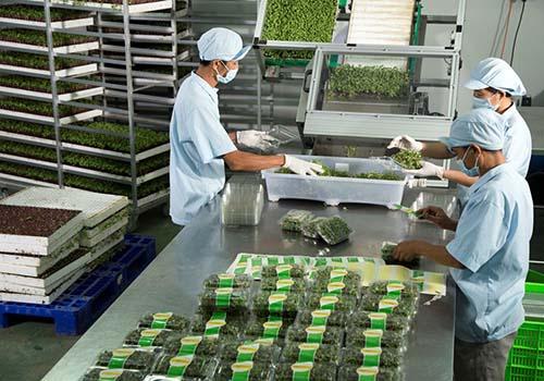 VinEco sẽ cam kết bao tiêu sản phẩm cho các hộ sản xuất trên toàn thị trường.