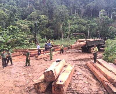 Bãi tập kết gỗ lậu ngay cửa rừng thuộc quản lý của Ban Quản lý rừng phòng hộ núi Vọng Phu