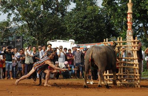 Nghi lễ đâm trâu trong một lễ hội truyền thống của đồng bào dân tộc bản địa Tây NguyênẢnh: Đình Thi