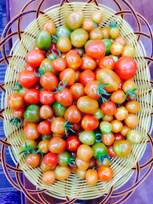 Rổ cà chua bi chi chít quả chín đỏ và hấp dẫn
