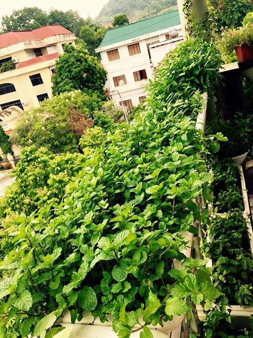 Nơi trồng đủ các loại rau gia vị: húng, mùi,...
