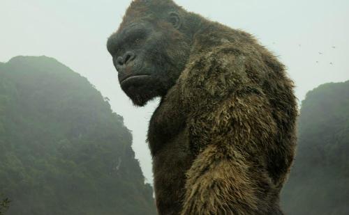 Bộ phim Kong: Skull Island được quay nhiều cảnh tại Việt Nam
