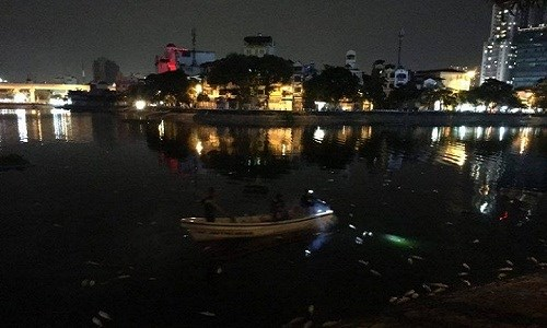 Cá hồ Hoàng Cầu lại chết bất thường hàng loạt - Ảnh 2.