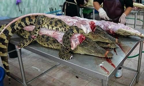 """Vì sao thịt cá sấu """"cháy hàng"""" ở Thái Lan? - Ảnh 1."""