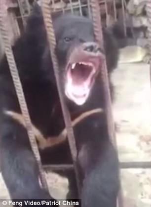 Du khách Trung Quốc giết gấu bằng súng máy - Ảnh 1.