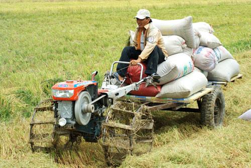 Nông dân hưởng lợi ít hơn nhiều khâu trung gian trong nông nghiệp Ảnh: Ngọc Trinh
