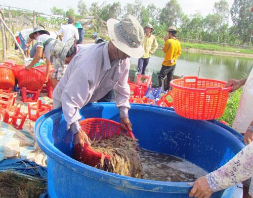 Hầu hết mặt hàng nông, lâm, thủy sản có lượng xuất khẩu giảm trong 2 tháng đầu năm Ảnh: Duy Nhân