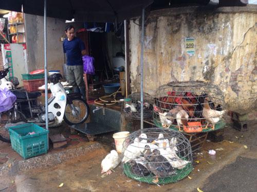 Một cửa hàng bán thịt gà tại chợ tạm cầu Lủ (quận Hoàng Mai, TP Hà Nội) Ảnh: NGUYỄN HƯỞNG