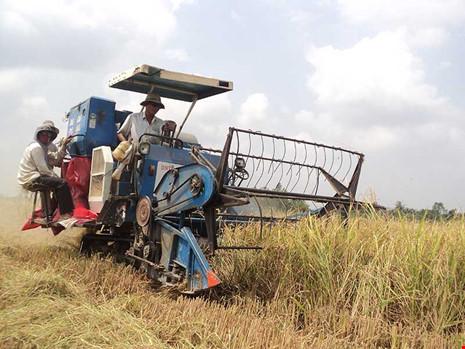 Chính sách về lúa gạo hiện nay đang gây nhiều bất lợi cho nông dân. Trong ảnh: Thu hoạch lúa tại đồng bằng sông Cửu Long. Ảnh: gia tuệ