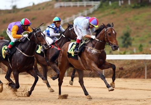 Ngựa đua tranh tài trong những đợt đầu của ngày khai trương