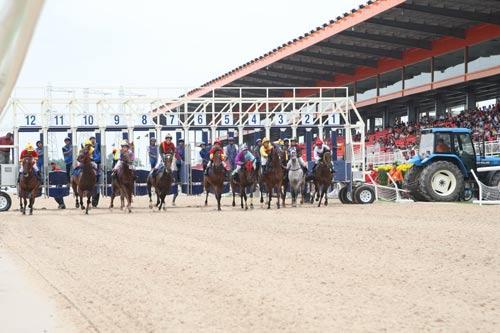 Đua ngựa ở trường đua Đại Nam (Bình Dương) Ảnh: ĐÔNG LINH