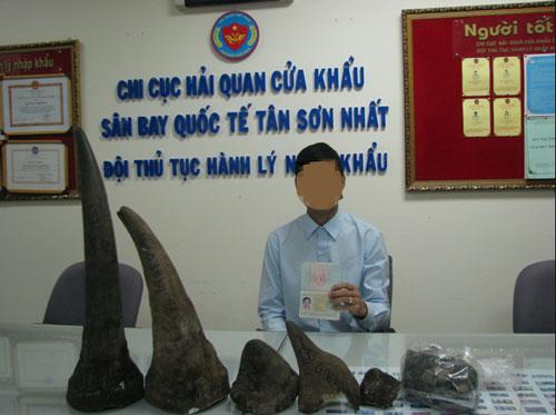 Một đối tượng bị phát hiện vận chuyển 13 kg sừng tê giác qua cửa khẩu Tân Sơn Nhất Ảnh: THUẬN THIÊN