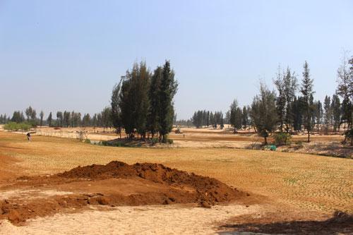 Việc trồng rừng thay thế sẽ không bù đắp được diện tích rừng đã mất Ảnh: HỒNG ÁNH