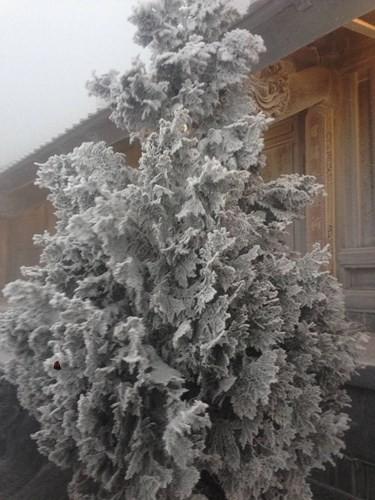 Cận cảnh đỉnh Fansipan trắng xóa trong băng tuyết - Ảnh 2.