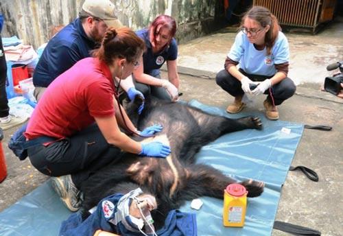 Cứu hộ 3 con gấu ngựa nuôi nhốt trong nhà dân - Ảnh 1.