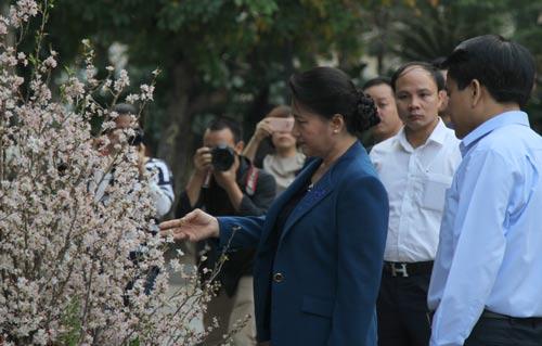 Chủ tịch Quốc hội Nguyễn Thị Kim Ngân tham quan triển lãm hoa anh đào tại khu vực vườn hoa Tượng đài Lý Thái Tổ Ảnh: TTXVN