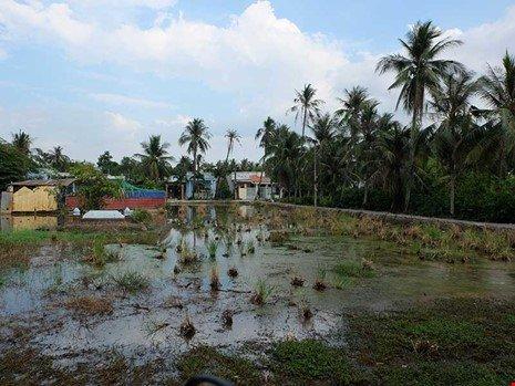 Đất đai hoang hóa trong khu bán đảo Thanh Đa.