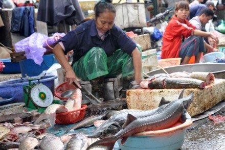 Cá Trung Quốc ngậm hóa chất kích thích bán tại Việt Nam - Ảnh 2.