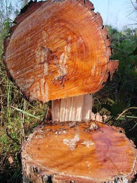 Bắt 1 chủ tịch xã vì cho doanh nghiệp phá rừng phòng hộ - Ảnh 1.