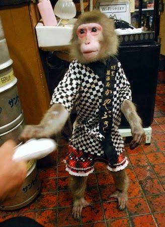 Quán bar Nhật Bản gây sốc với bồi bàn là khỉ - Ảnh 3.