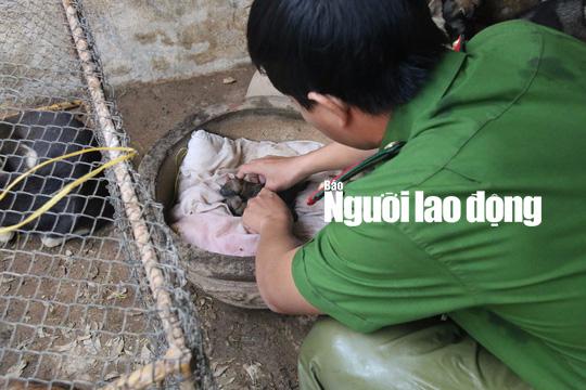Được cứu khỏi cẩu tặc, 2 chú cún chào đời tại trụ sở công an - Ảnh 5.